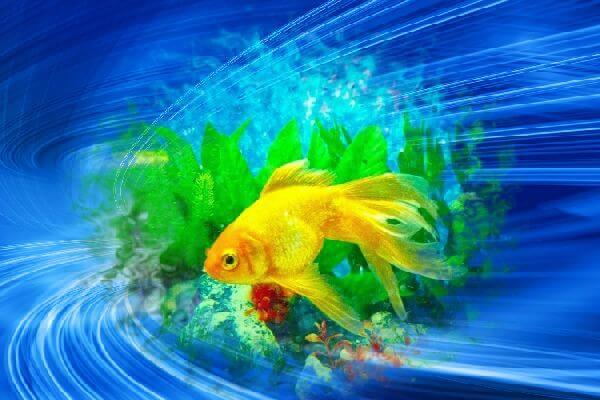 akvariumnaya-rybka