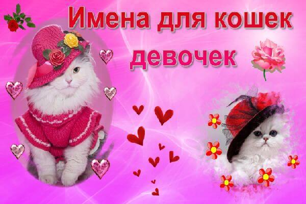 imena-dlya-koshek-devochek