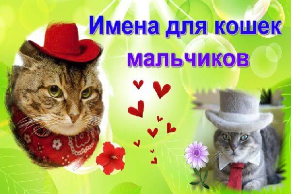 imena-dlya-koshek-malchkov