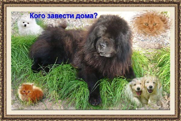 kakikh-zhivotnykh-mozhno-zavesti-doma