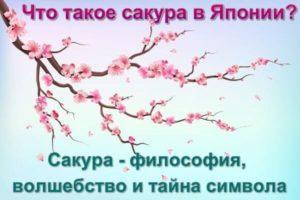 chto-takoe-sakura-v-yaponii-risunok-vetki-sakury